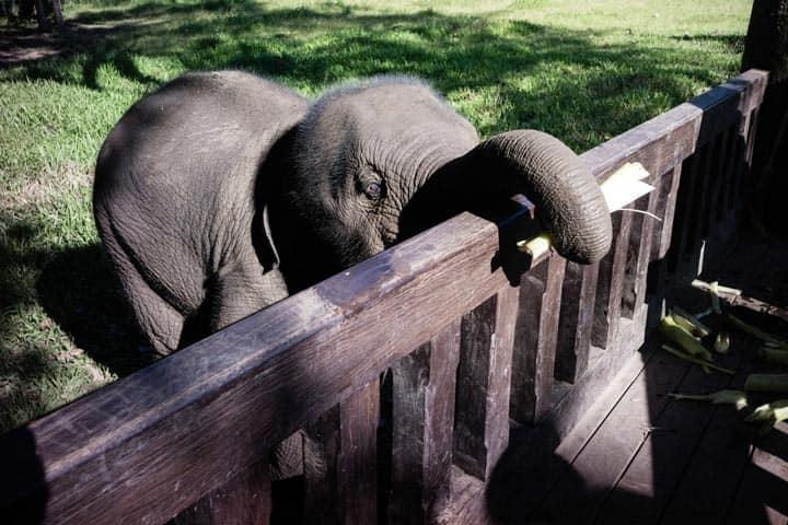 Ферма слонов - Nam Ou Elephant farm