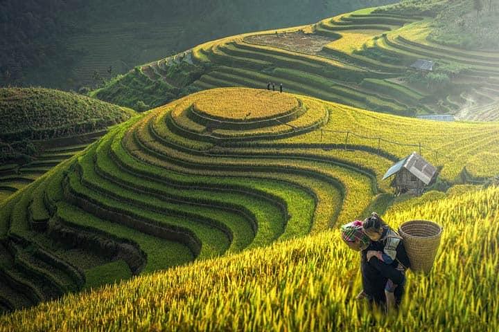 Долина Sapa, северный Вьетнам